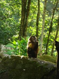 mono machin, centro de rehabilitacion de animales, cerelias, peru