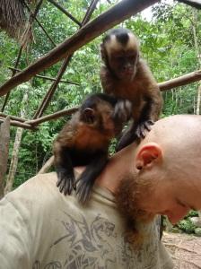 Machin monos en Cerelias, Tarapoto, Peru